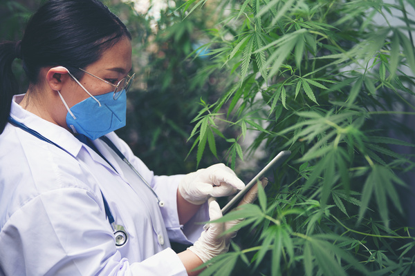 Cannabis Might Block COVID-19 Infection